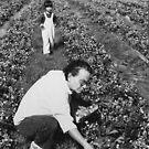 The U pick Farm  by Isa Rodriguez