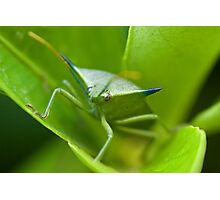 Stink Bug Photographic Print