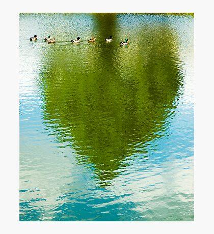 Ducks & Heart Tree Photographic Print
