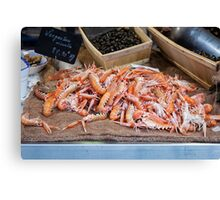 Fresh Raw Langoustine Lobsters Canvas Print