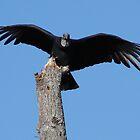 Black Wings by bubbledrew