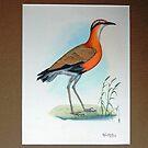 birds by krishan gupta