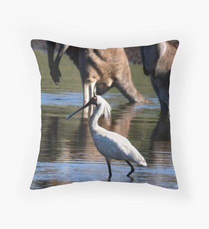 Royal Spoonbill, Platalea regia Throw Pillow
