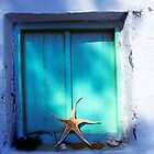 Starfish Window by secondcherry