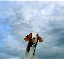 sky goat by Nigel Hillier