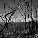Scary Trees- Sampson Flat Bushfire 3 by Ben Loveday