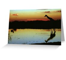 Giraffe at Sunset, Etosha, Namibia  Greeting Card