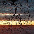 Sunset Through Tree by John Beamish