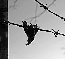 leaf on wire by funkybunch