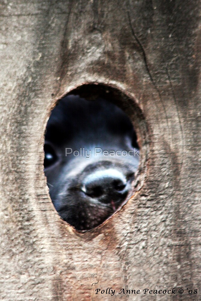 The Other Side of The Infamous Peep Hole by Polly Peacock