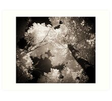 Autumn in Infrared Series , No. 1 Art Print