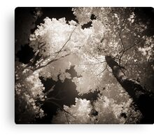 Autumn in Infrared Series , No. 1 Canvas Print