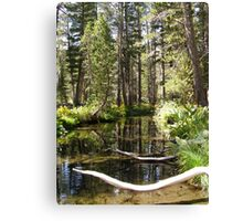 Coldwater Creek Canvas Print