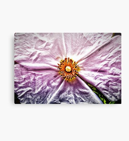 Paper Flower Canvas Print