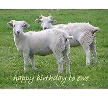 happy birthday to ewe Photographic Print