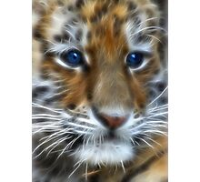 Siberian Tiger Cub Photographic Print