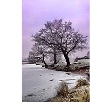 New Year Frost Photographic Print