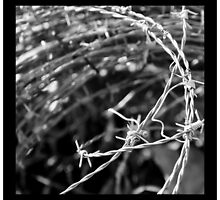 Barbwire by reneegw
