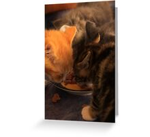 Lunch for Kittens Greeting Card