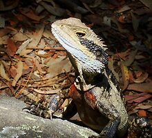 Posing Eastern Water Dragon by Of Land & Ocean - Samantha Goode
