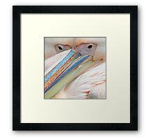Pink pelicans Framed Print