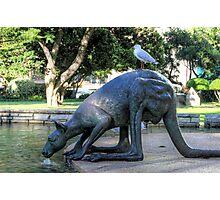 Kangaroos In The City 1 - Perth WA - HDR Photographic Print