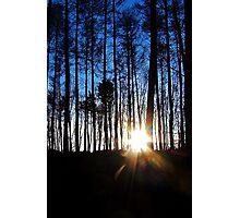 Through the Pines Photographic Print
