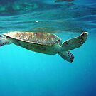 turtledive by jenitae