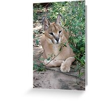Sally, the Caracal Greeting Card