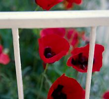 Balcony,poppies by Vivi Kalomiri