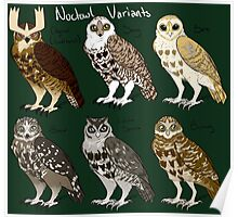 Noctowl Variants Poster