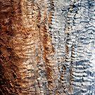 Tree Skin 2 by Miriam Shilling
