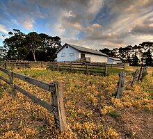 The Shearing Shed by Kerry Duffy
