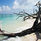 Tree on Lady Shores by John Donatiu