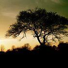 Light Through the Branches by Elliott Walker