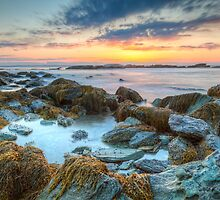 Sunrise at Sachuest Point Wildlife Refuge  by Joshua McDonough Photography