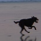 Running Dog by Tama Blough