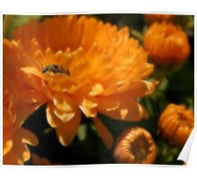 Lady Bug Orange Poster