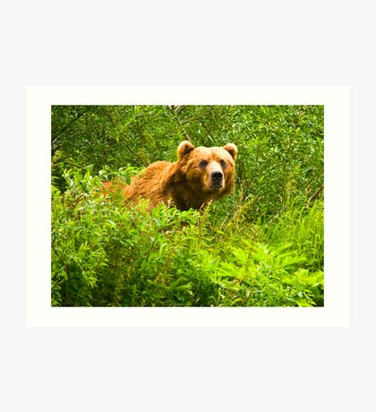 Ursos Arctos, The Kodiak Bear Art Print