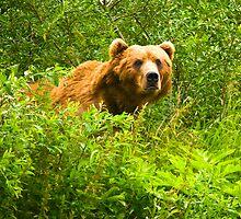 Ursos Arctos, The Kodiak Bear by Albert Dickson