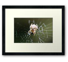 That Web Framed Print