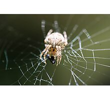 That Web Photographic Print