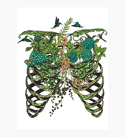 Nature Rib Cage Photographic Print