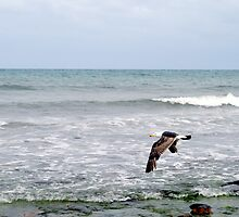 Sea-bird at Hallett Cove, S.A. by elphonline
