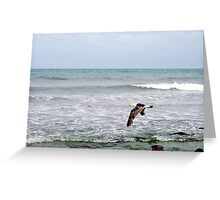 Sea-bird at Hallett Cove, S.A. Greeting Card