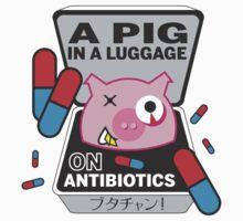PIG IN A LUGGAGE ON ANTIBIOTICS