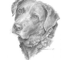 Chocolate lab w/wavy hair drawing by Mike Theuer
