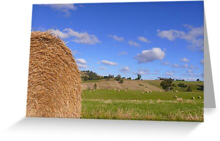 Hay Baling time by Josie Jackson