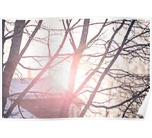 Sunset over snowy roofs through winter trees Poster