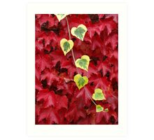 Autumn Colour at Giverny (Monet's garden) Art Print